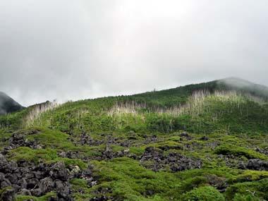 2011.7.3^5縞枯れ現象の山.jpg